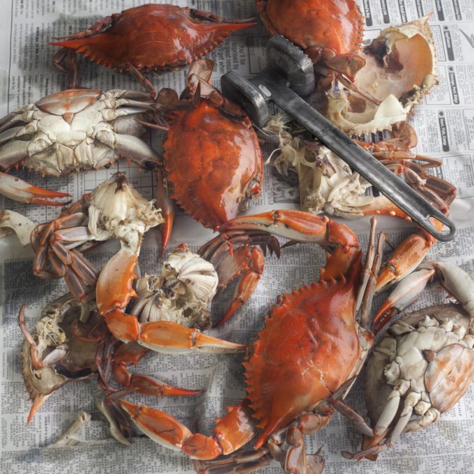 Louisiana blue crabs turn bright red when boiled.